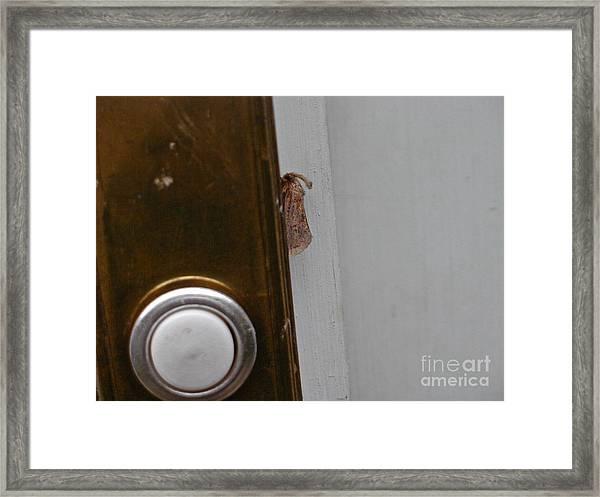 Tiny Doorbell Moth Framed Print