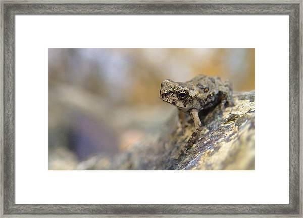 Tiny Frog Framed Print