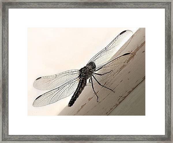 Tiny Magnificence  Framed Print