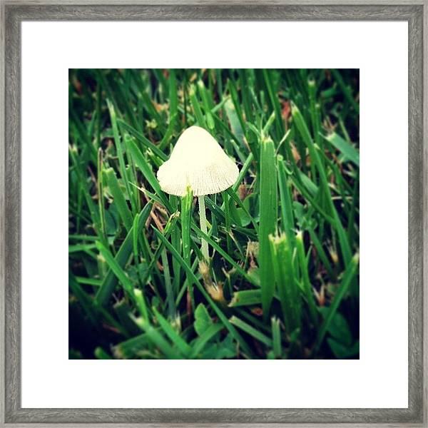 Tiny Mushroom In Grass #mushroom #grass Framed Print