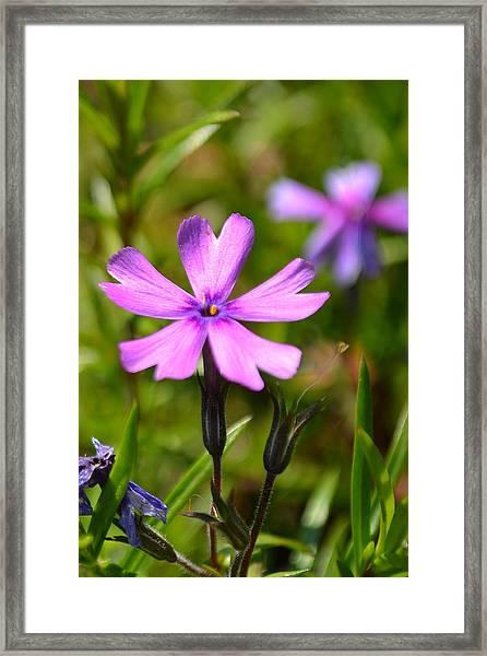 Tiny Purple Flower #1 Framed Print