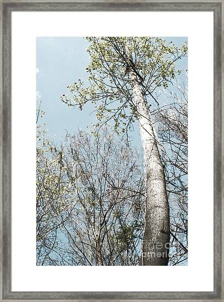 Tip To The Top Framed Print