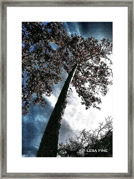 Tippy Top Tree II Art Framed Print