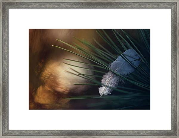 Tired Wings... Framed Print