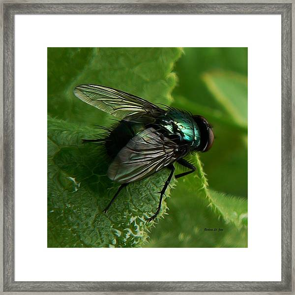To Be The Fly On The Salad Greens Framed Print