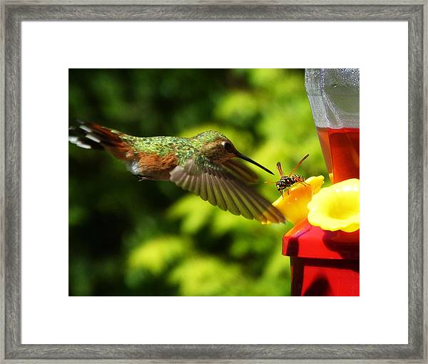 To Share Or Not To Share Framed Print