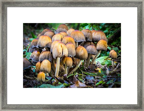 Toadstool Family. Framed Print