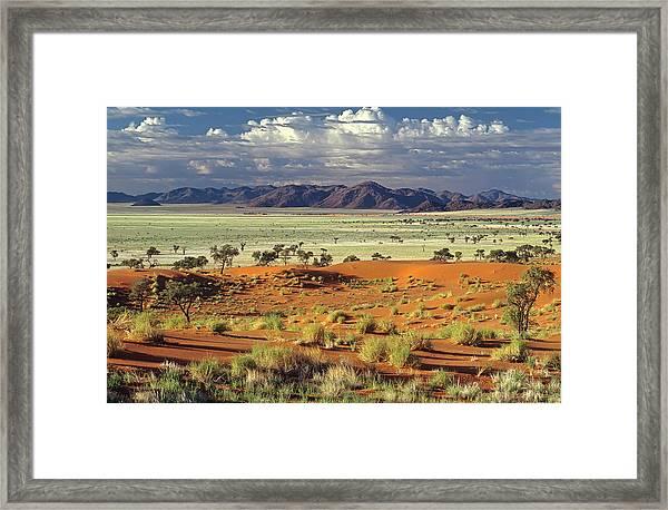 Tok Tokkie Desert Framed Print