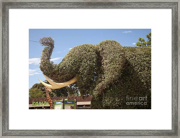 Topiary Elephant Framed Print