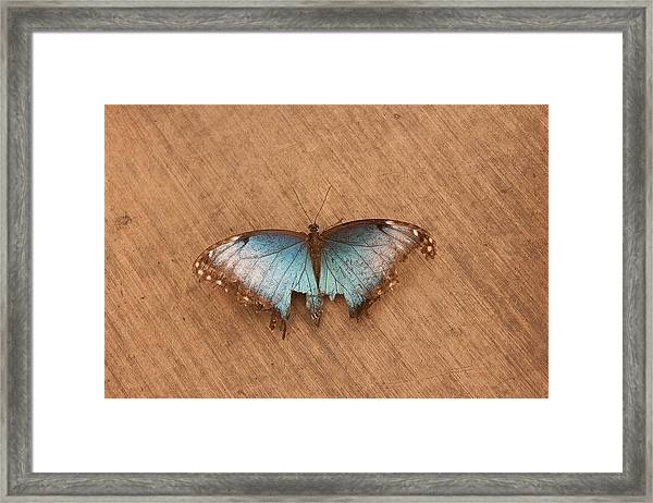 Torn Beauty Framed Print