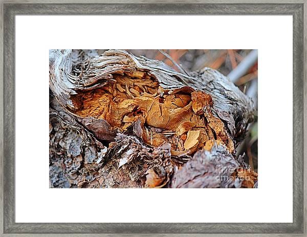 Torn Old Log Framed Print