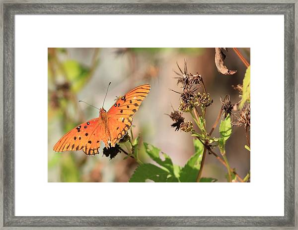 Torn Wing And Dry Flowers Framed Print
