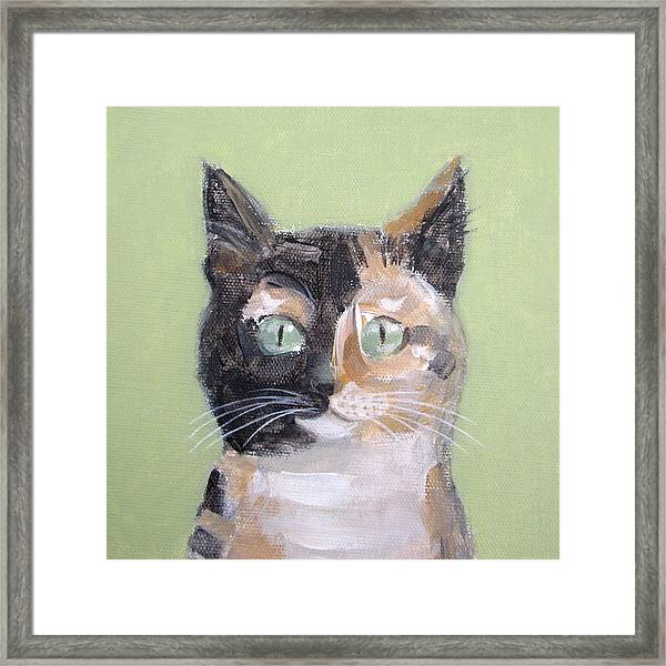Tortie Cat Framed Print