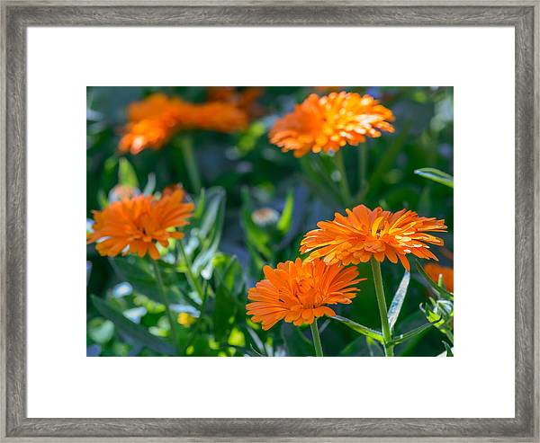 Touch By Light Framed Print