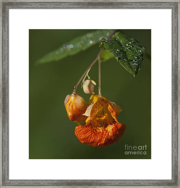Touch Me Not.. Framed Print