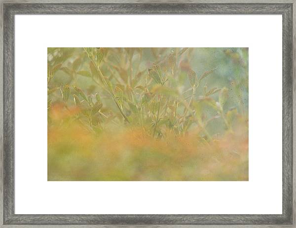 Touches Of Fall Framed Print