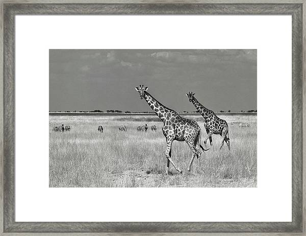 Tourists Spend Framed Print