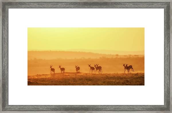 Towards Sunset Framed Print