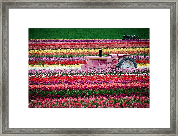 Tractor Races Framed Print