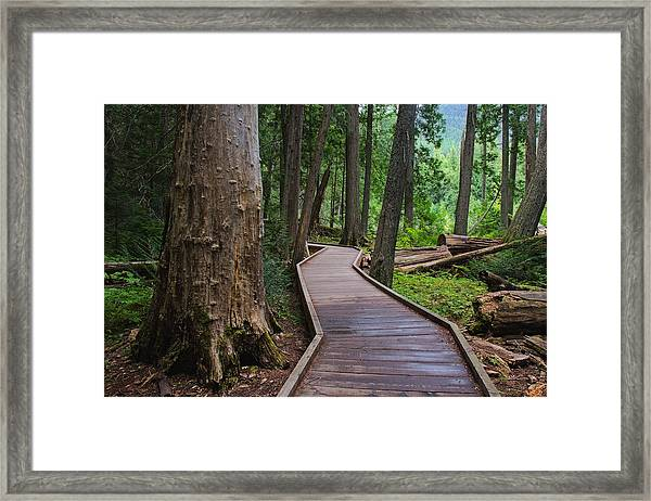Trail Of The Cedars Framed Print