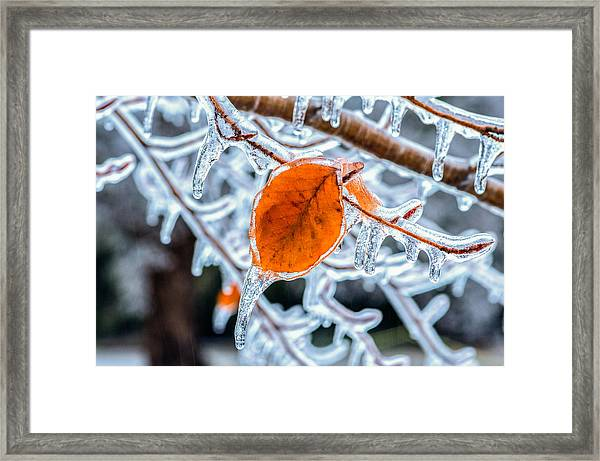 Framed Print featuring the photograph Trapped by Garvin Hunter
