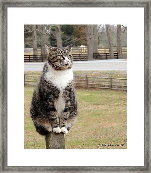 Traveler Posted Framed Print