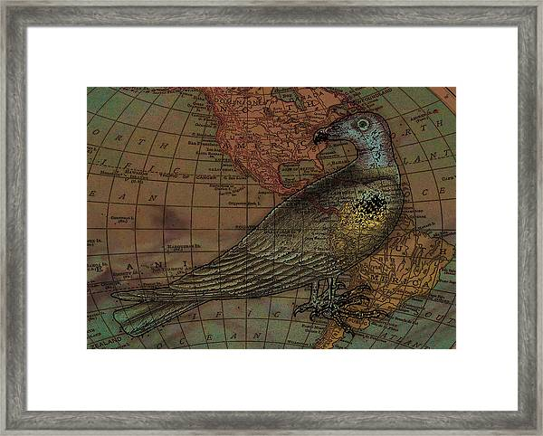 Travelling With The Buzzard Framed Print