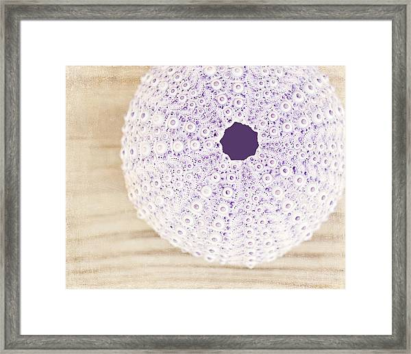 Treasure From The Sea Framed Print
