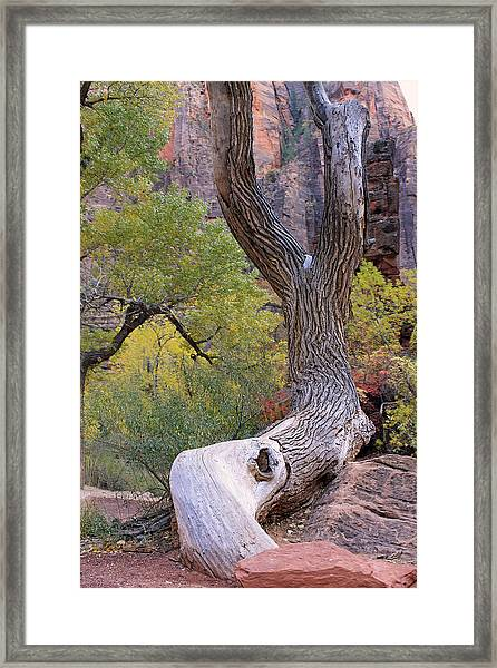 Tree @ Zion National Park Framed Print