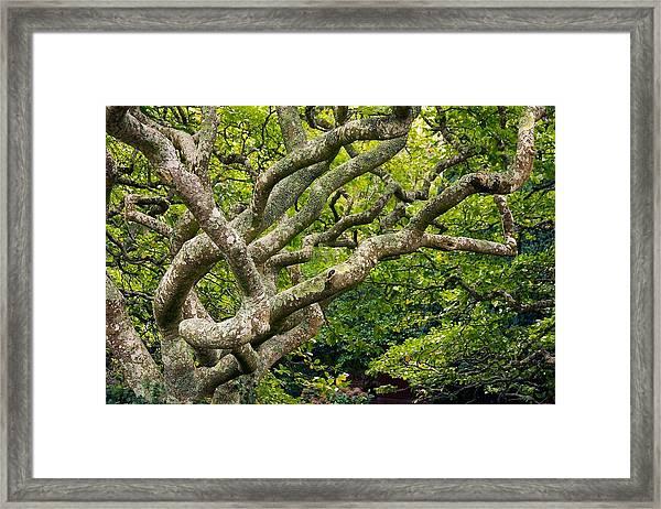 Tree #1 Framed Print