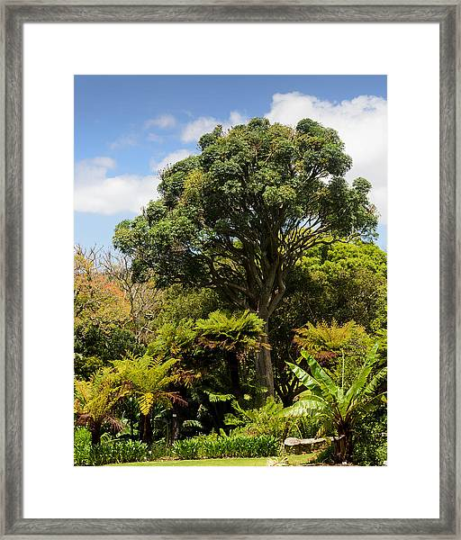 Tree And Ferns Framed Print
