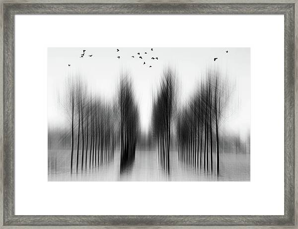 Tree Architecture Framed Print