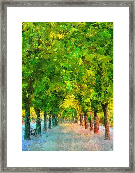 Tree Avenue In The Vienna Augarten Framed Print