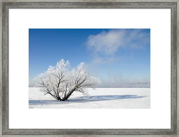 Tree By The River Covered With Hoar Frost. Framed Print