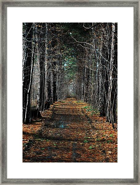 Framed Print featuring the photograph Tree Chute by David Armstrong