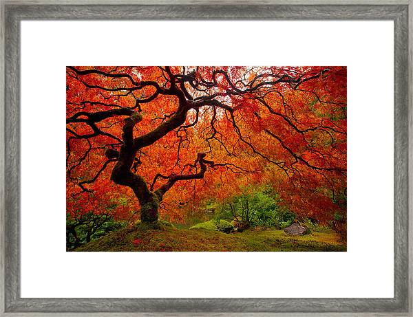 Tree Fire Framed Print