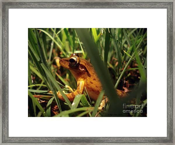 Tree Frog Chorus Framed Print