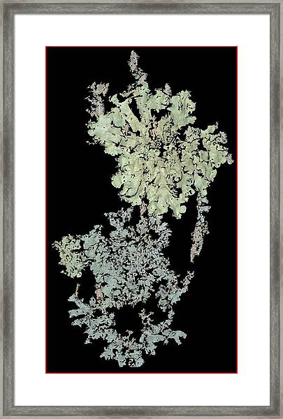 Tree Fungus Framed Print