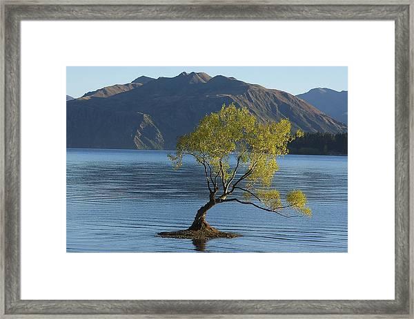 Tree In Lake Wanaka Framed Print