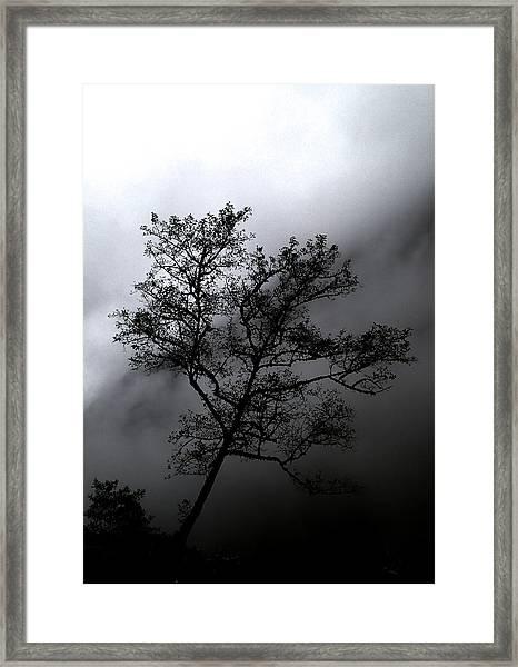 Tree In Mist Framed Print
