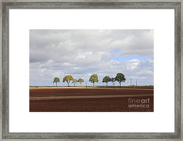Tree Line France Framed Print