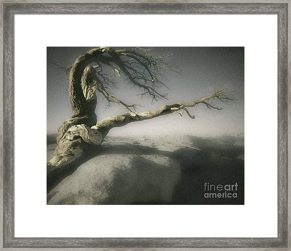 Tree Of Ages Framed Print