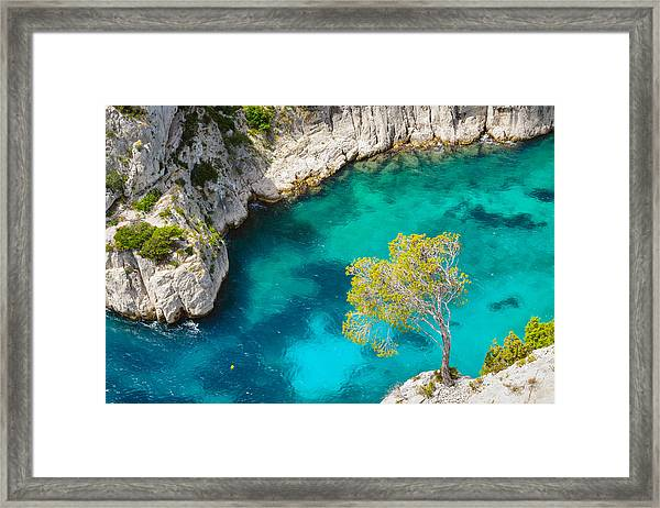 Tree On Turquoise Waters Framed Print
