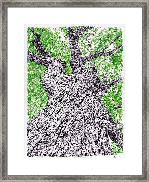 Tree Pen Drawing 4 Framed Print