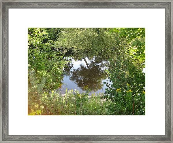 Tree Reflection Framed Print by Carolyn Reinhart