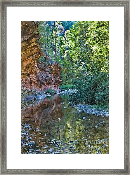 Framed Print featuring the photograph Tree Reflection by Mae Wertz