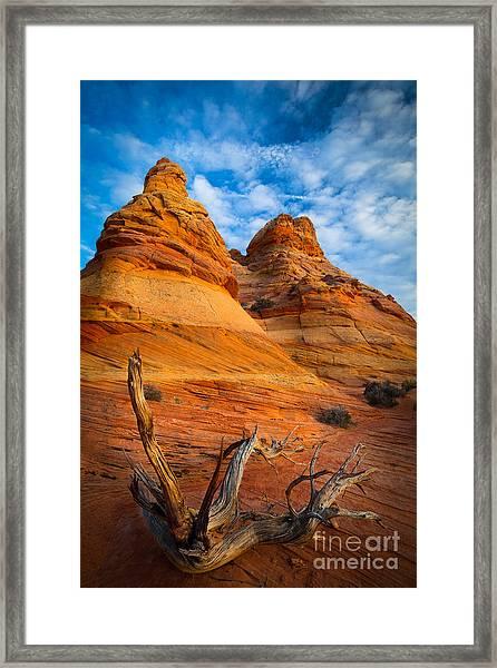 Tree Remnants Framed Print