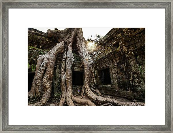 Tree Roots Growing Out Of Tah Prohm Framed Print