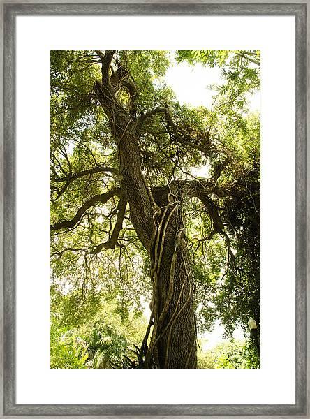 Tree Scape Framed Print