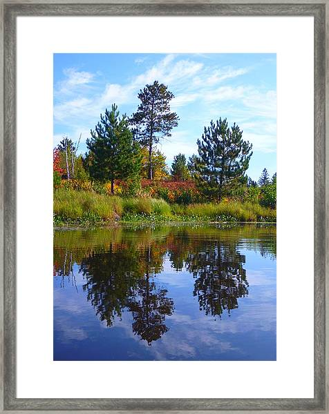 Framed Print featuring the photograph Tree Sisters by Gigi Dequanne